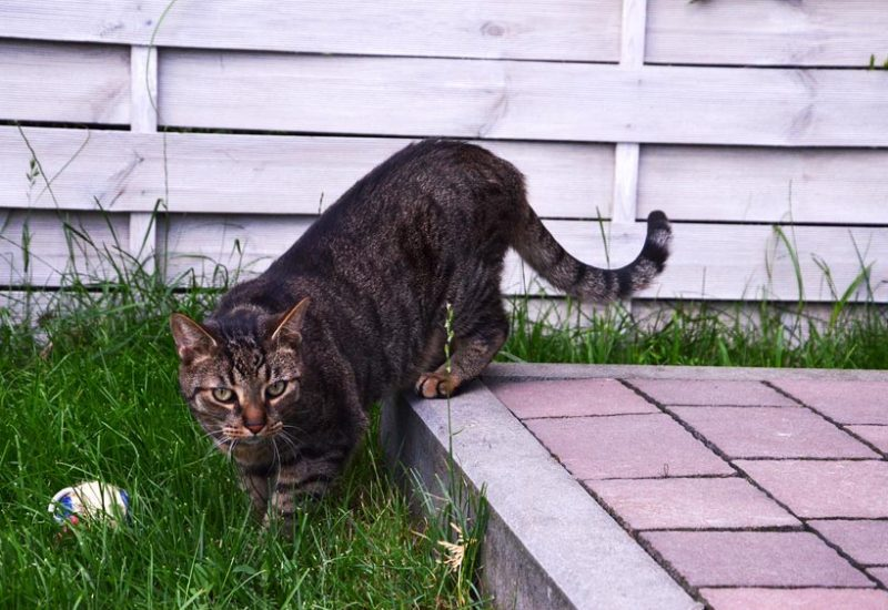 szczepienia kot małe zwierzęta