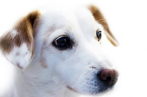 Trymowanie pies