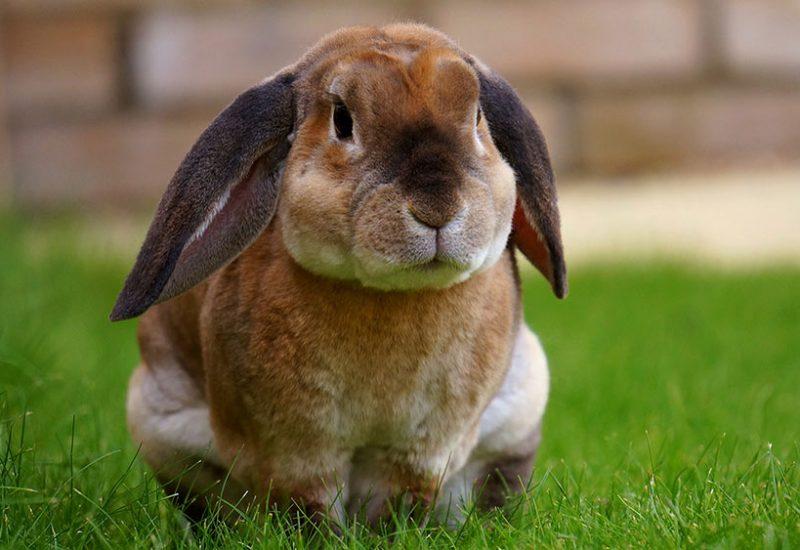 Problemowe zęby gryzonii i królików