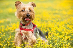 strzyżenie psów i kotów, groomer (psi fryzjer)